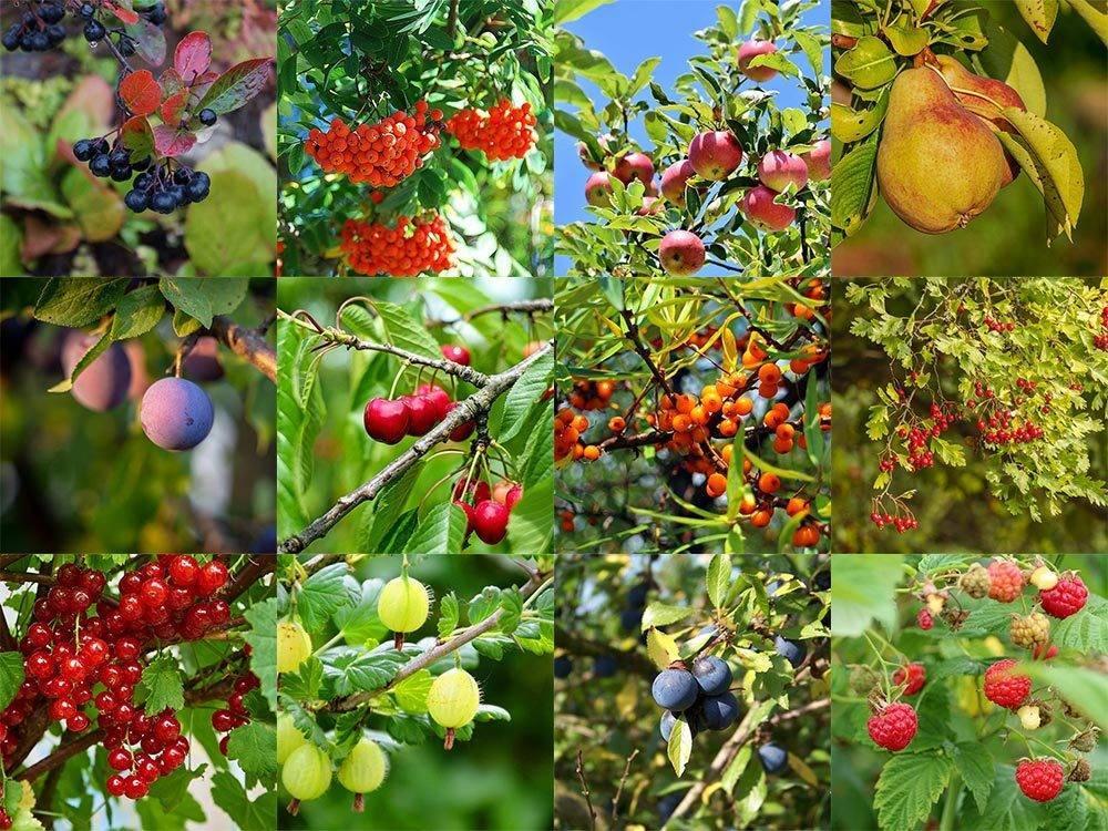 Акция на плодовые растения